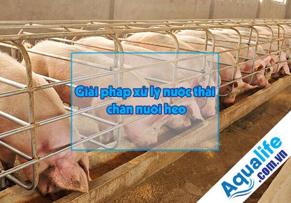 các phương pháp xử lý nước thải chăn nuôi heo