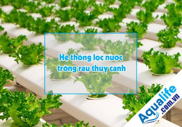 hệ thống lọc nước trồng rau thủy canh