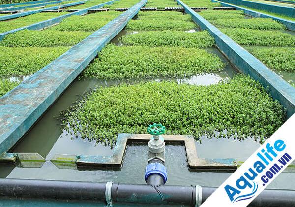 hệ thống trồng cây thủy canh