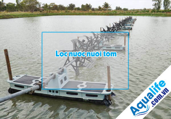 hệ thống lọc nước nuôi tôm công nghiệp