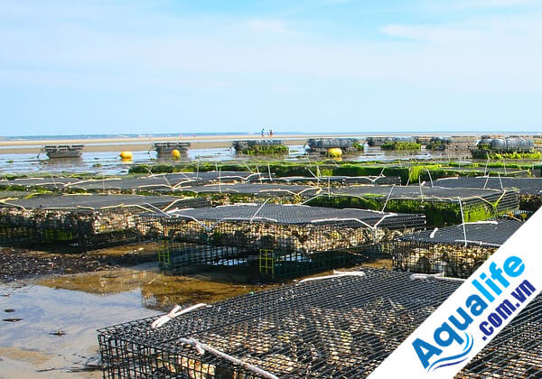 xử lý nước nuôi trồng thủy sản